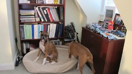 高娓娓:活的不如狗?美国的狗狗住别墅有专人服务游戏室受高等教育 ..._图1-8