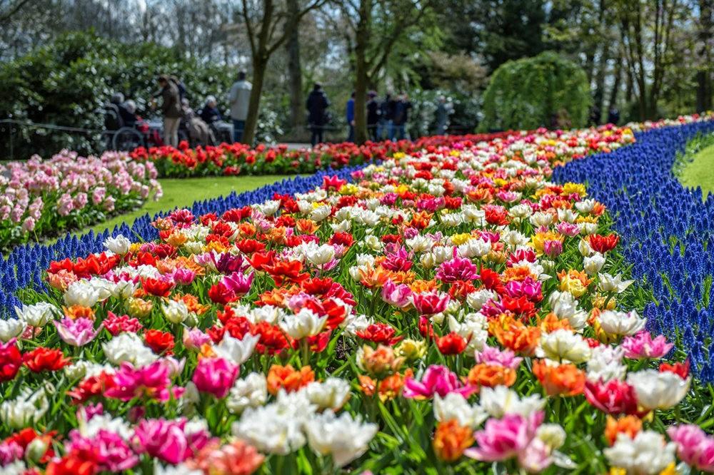 阿姆斯特丹周末 2----再探库肯霍夫公园_图1-2