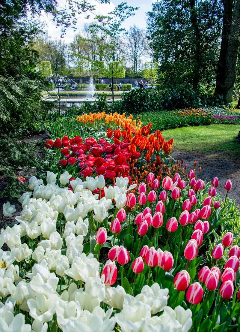 阿姆斯特丹周末 2----再探库肯霍夫公园_图1-5