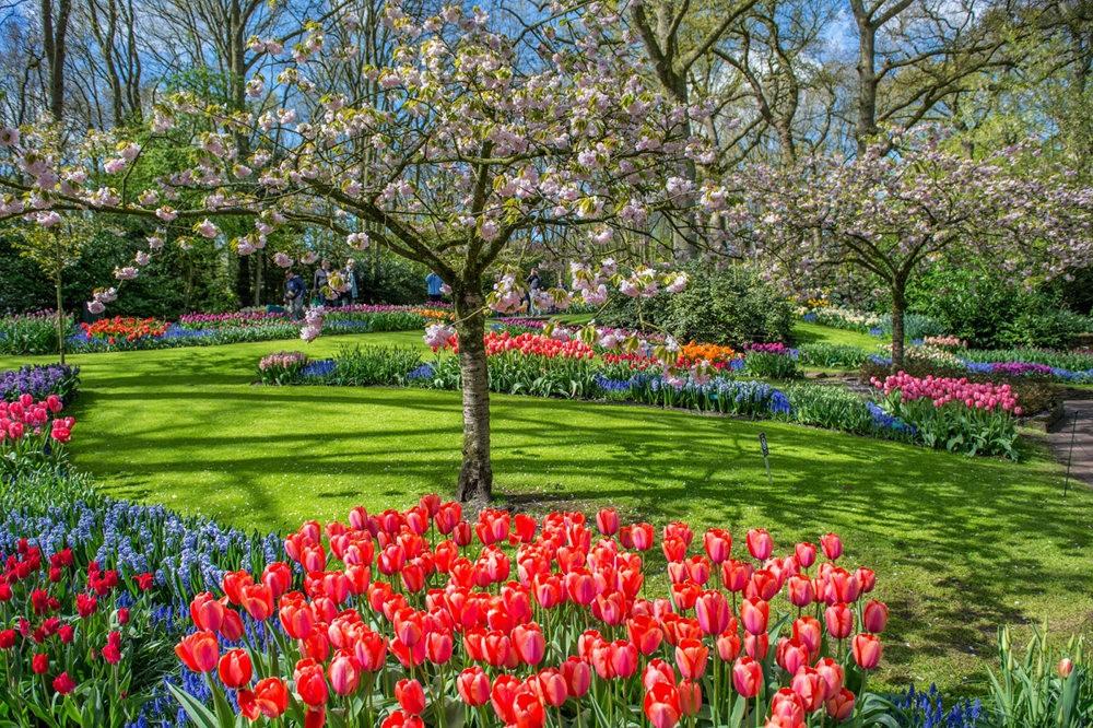 阿姆斯特丹周末 2----再探库肯霍夫公园_图1-21