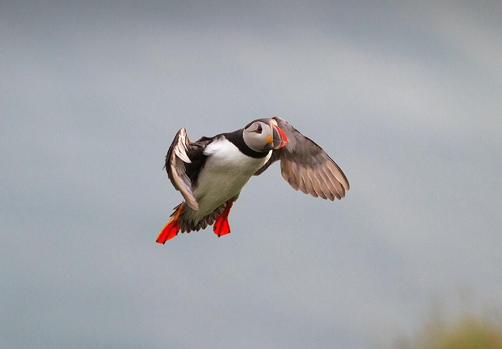 海鹦鸟_图1-4