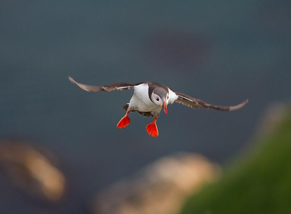 海鹦鸟_图1-5