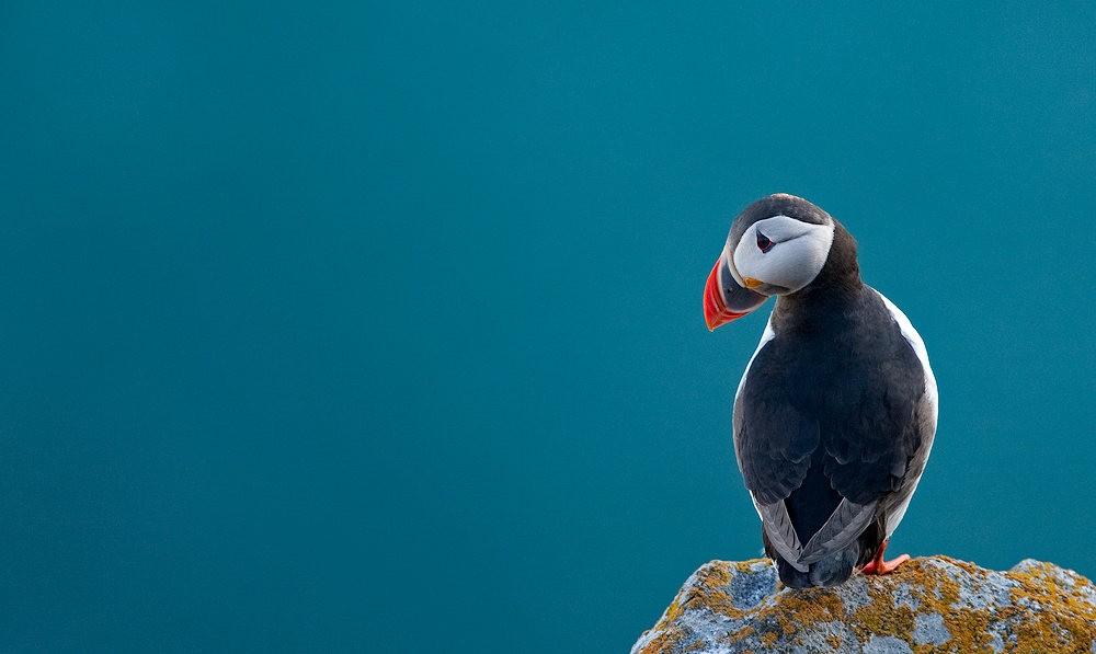 海鹦鸟_图1-16