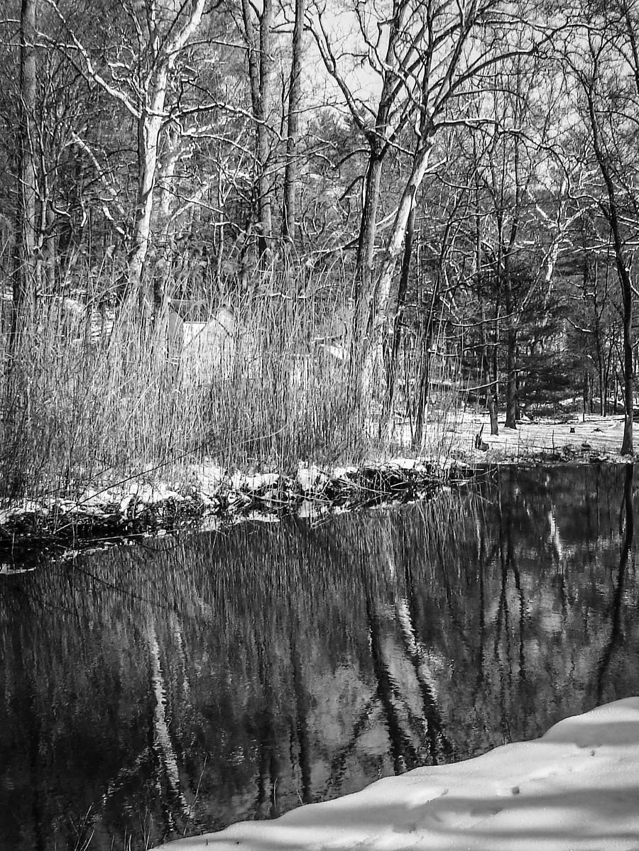 宾州雷德利克里克公园(Ridley creek park),秋去冬来_图1-6