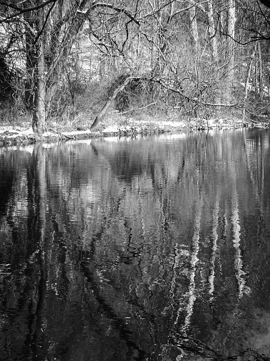 宾州雷德利克里克公园(Ridley creek park),秋去冬来_图1-7