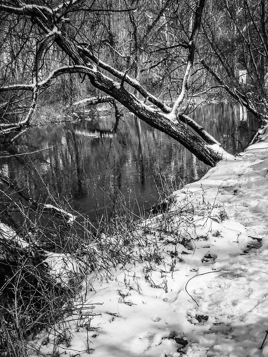 宾州雷德利克里克公园(Ridley creek park),秋去冬来_图1-4
