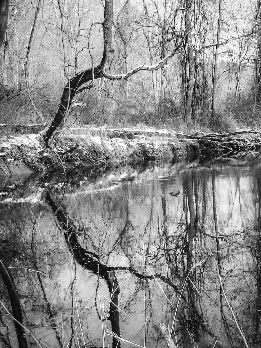 宾州雷德利克里克公园(Ridley creek park),秋去冬来_图1-1