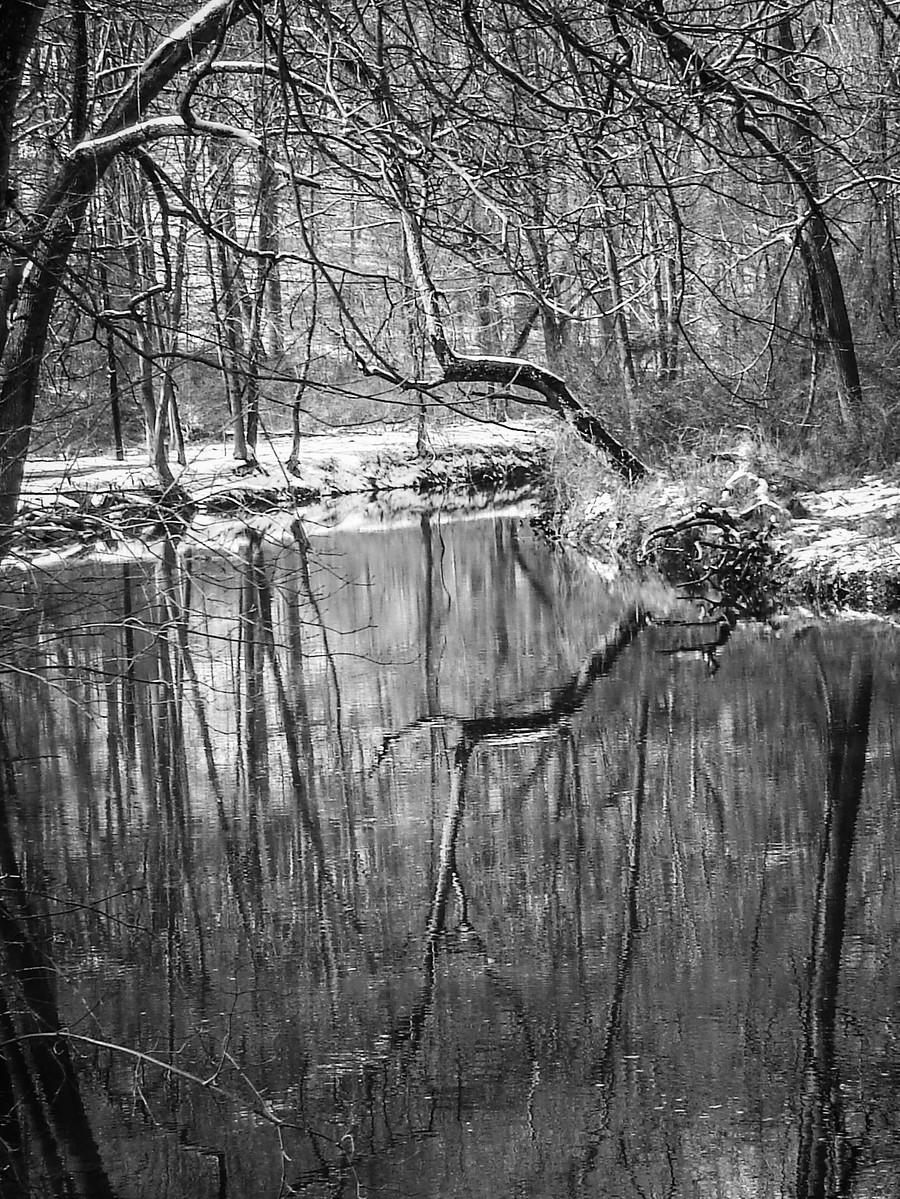 宾州雷德利克里克公园(Ridley creek park),秋去冬来_图1-8