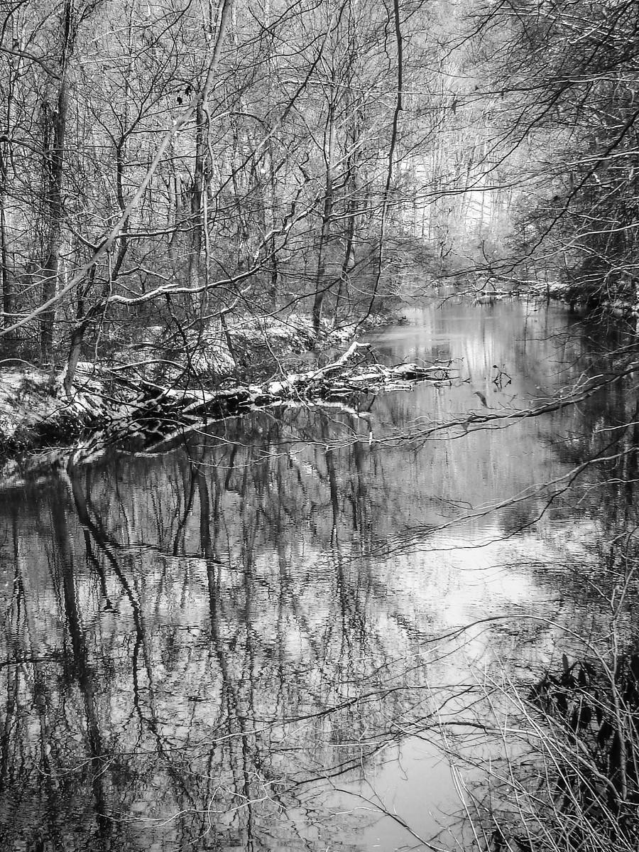 宾州雷德利克里克公园(Ridley creek park),秋去冬来_图1-10
