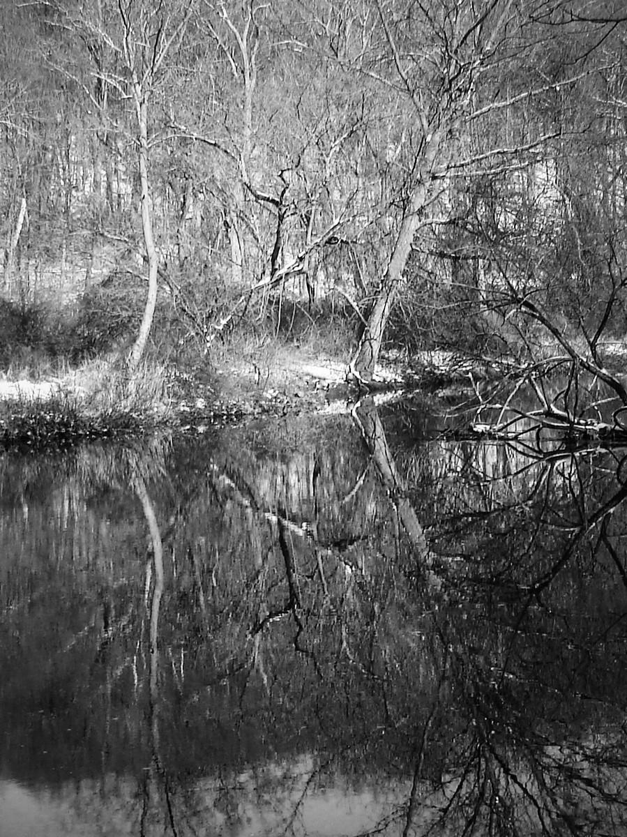 宾州雷德利克里克公园(Ridley creek park),秋去冬来_图1-16