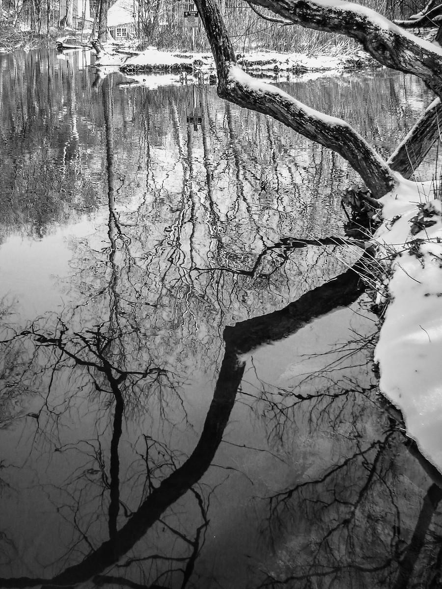 宾州雷德利克里克公园(Ridley creek park),秋去冬来_图1-15