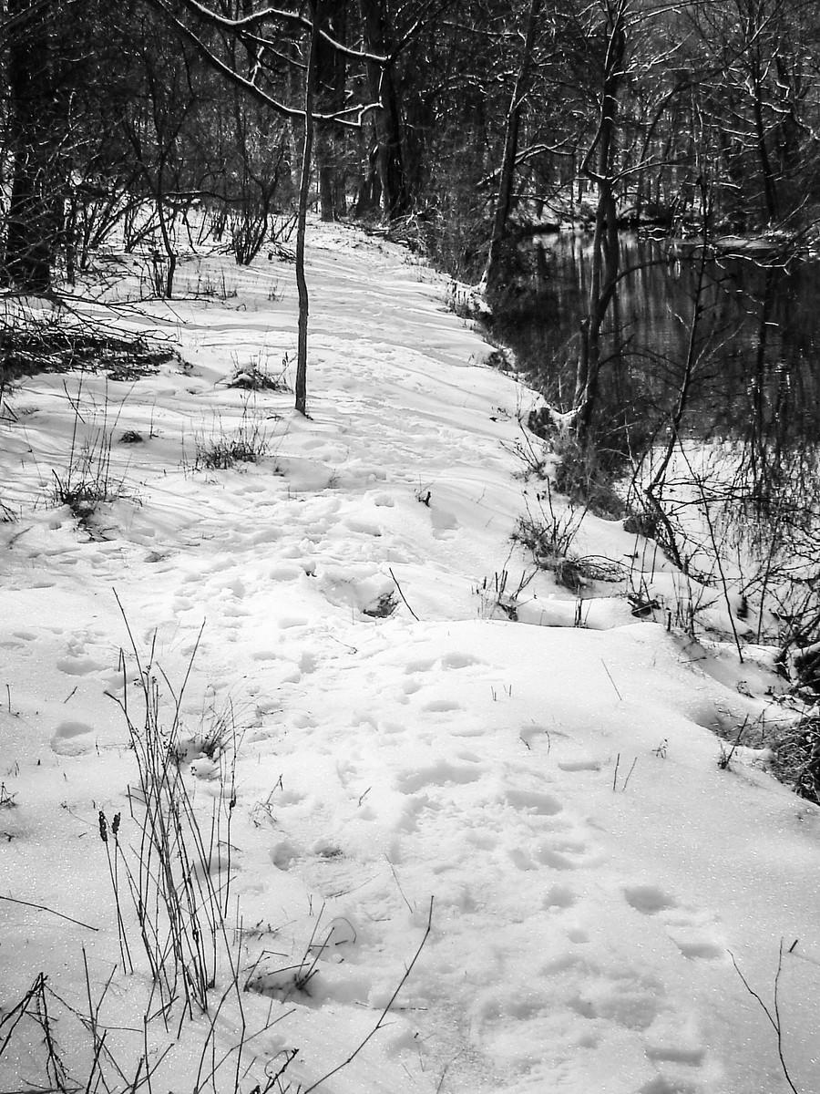 宾州雷德利克里克公园(Ridley creek park),秋去冬来_图1-12