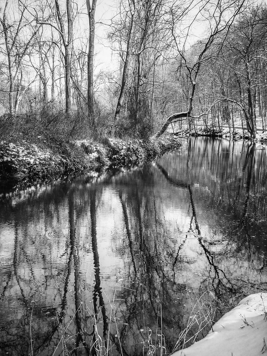 宾州雷德利克里克公园(Ridley creek park),秋去冬来_图1-13