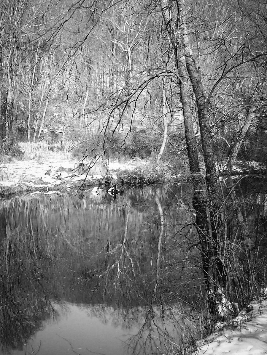 宾州雷德利克里克公园(Ridley creek park),秋去冬来_图1-19
