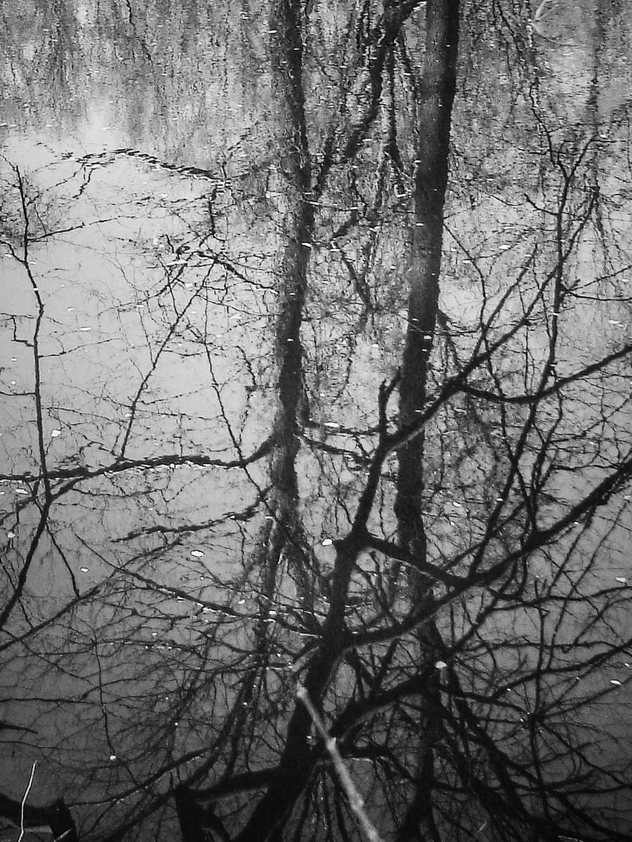 宾州雷德利克里克公园(Ridley creek park),秋去冬来_图1-14