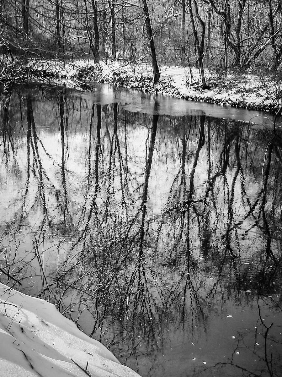 宾州雷德利克里克公园(Ridley creek park),秋去冬来_图1-17