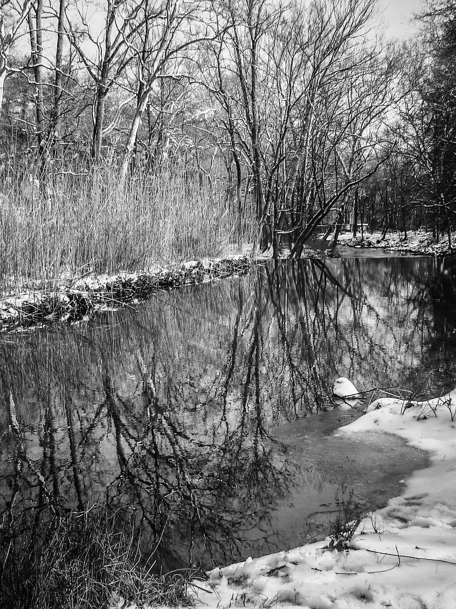 宾州雷德利克里克公园(Ridley creek park),秋去冬来_图1-22