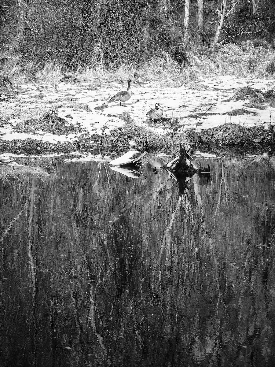 宾州雷德利克里克公园(Ridley creek park),秋去冬来_图1-21