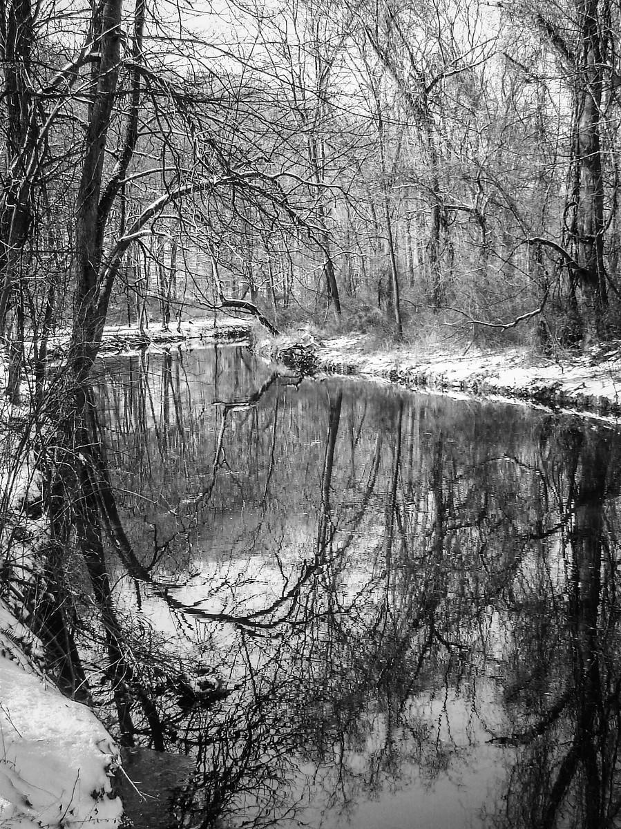 宾州雷德利克里克公园(Ridley creek park),秋去冬来_图1-27
