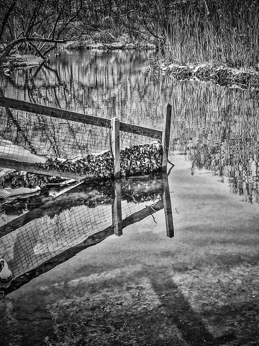 宾州雷德利克里克公园(Ridley creek park),秋去冬来_图1-25