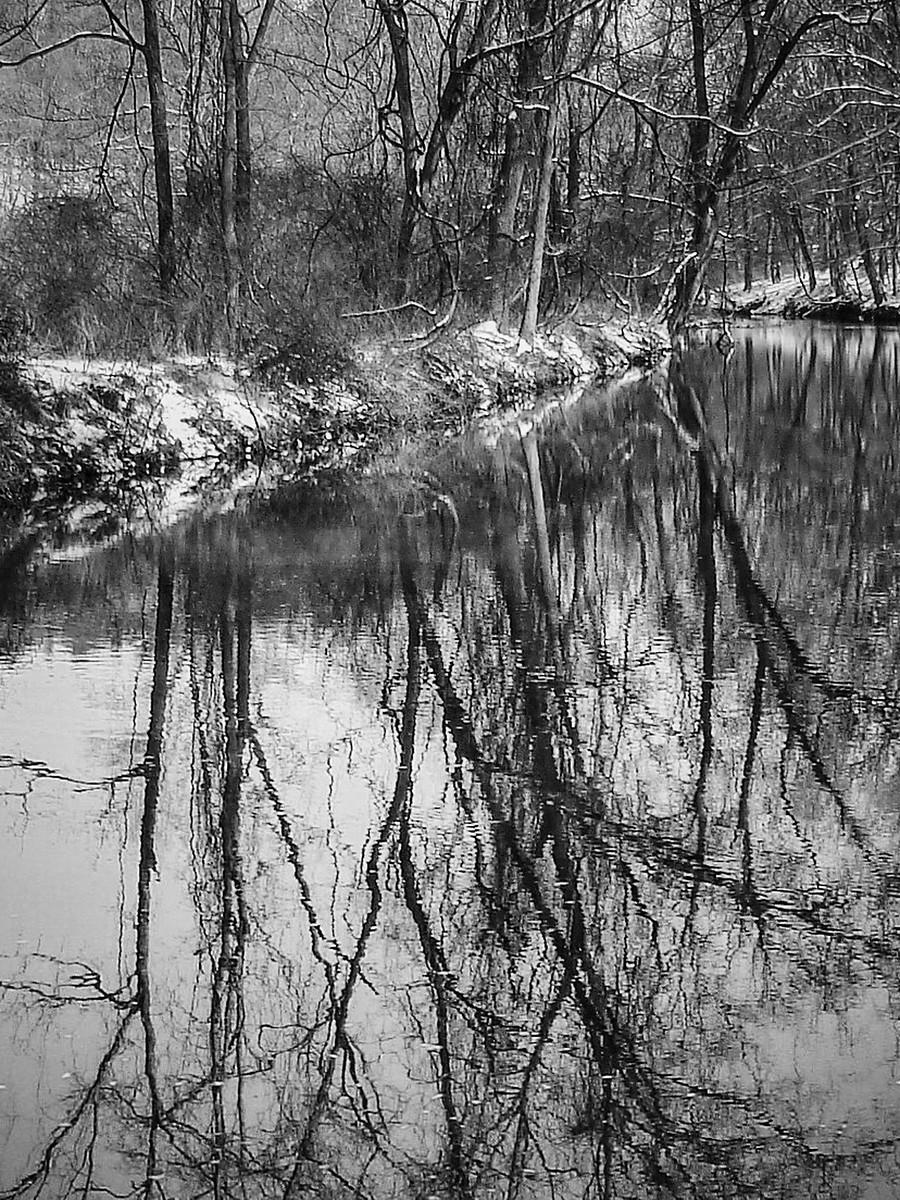 宾州雷德利克里克公园(Ridley creek park),秋去冬来_图1-23