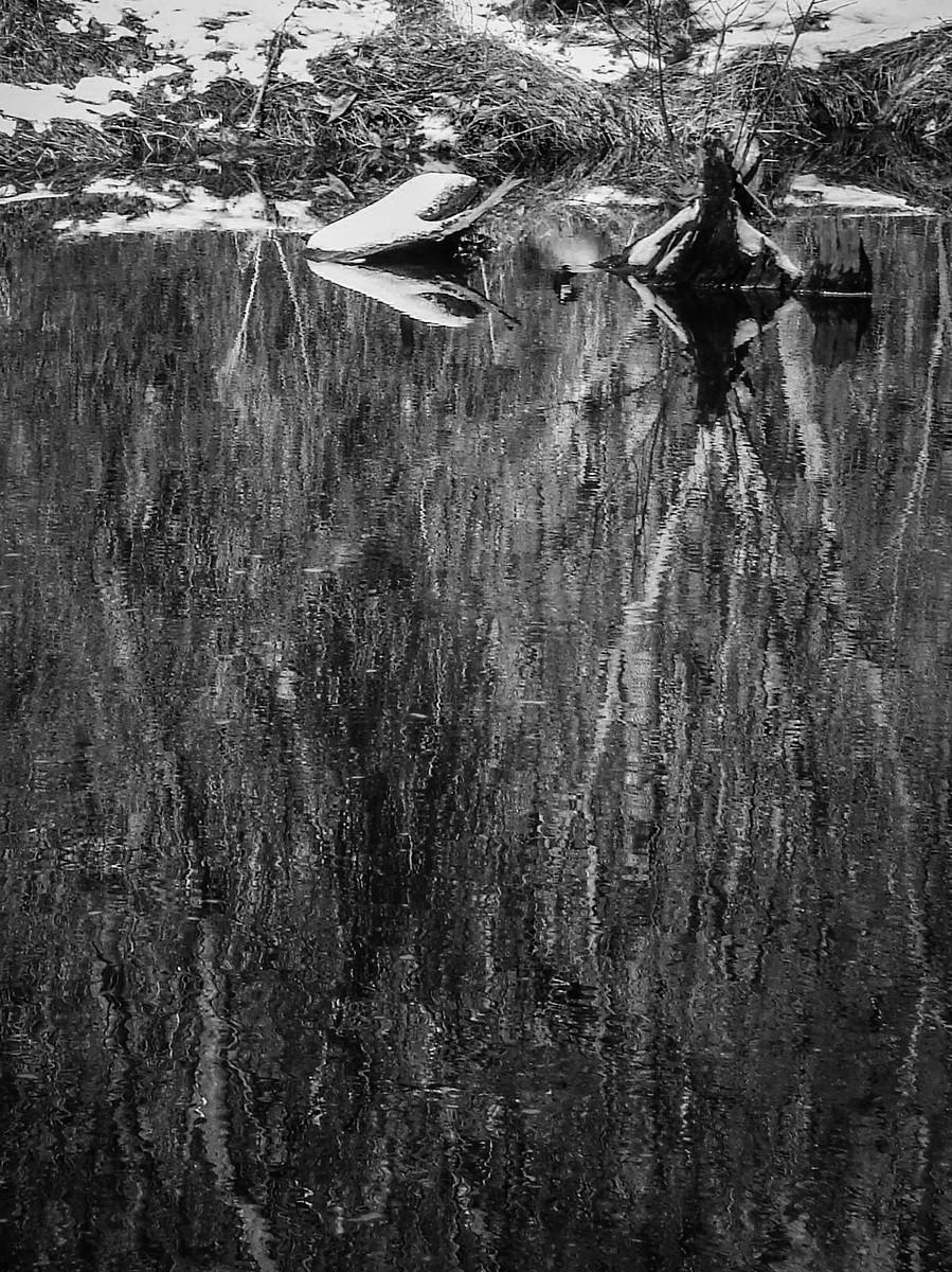 宾州雷德利克里克公园(Ridley creek park),秋去冬来_图1-33