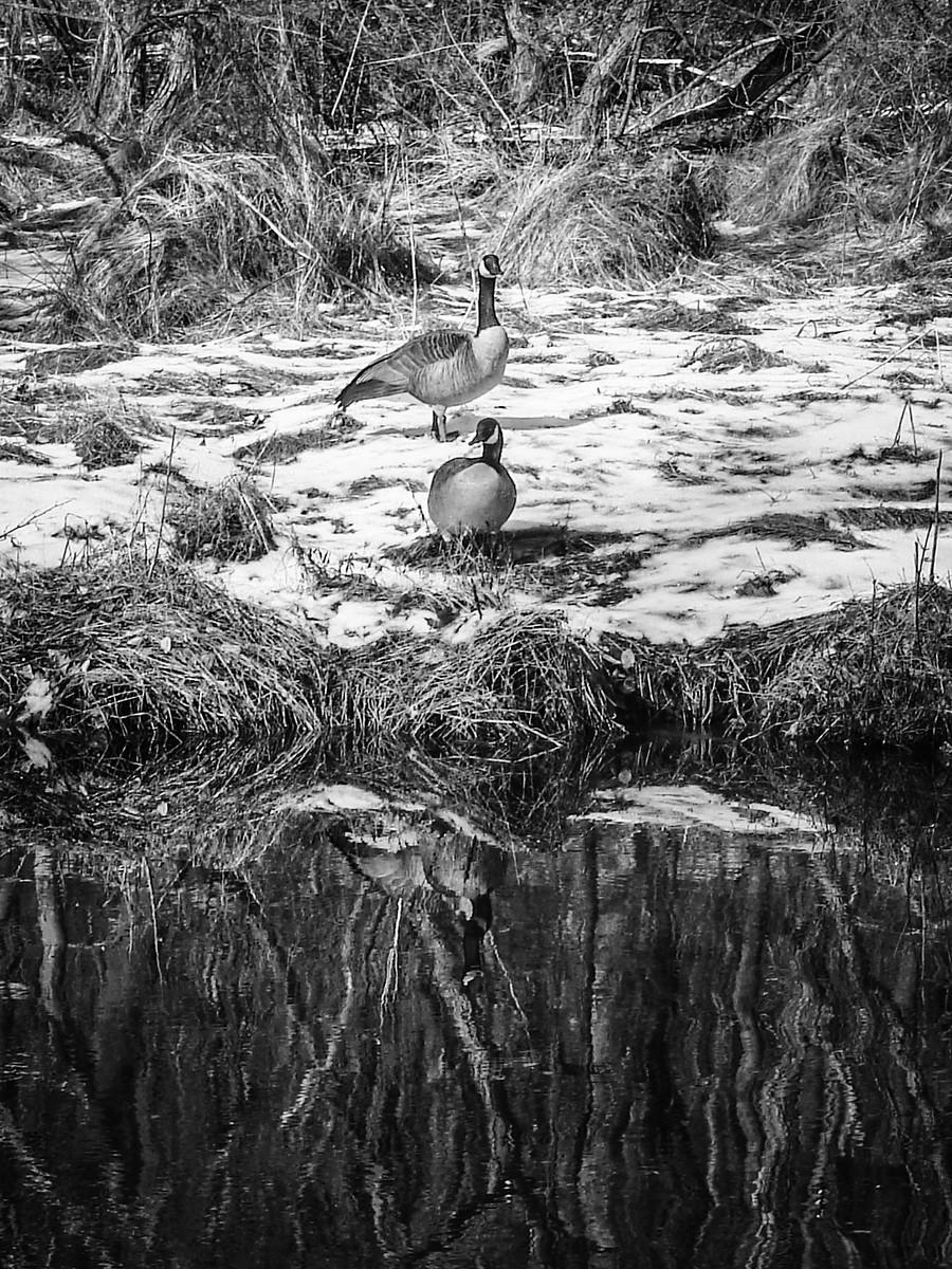 宾州雷德利克里克公园(Ridley creek park),秋去冬来_图1-30
