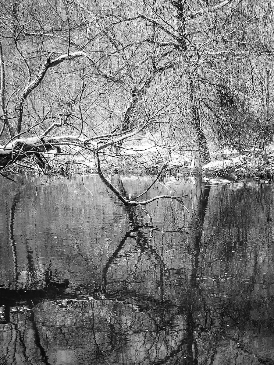 宾州雷德利克里克公园(Ridley creek park),秋去冬来_图1-32