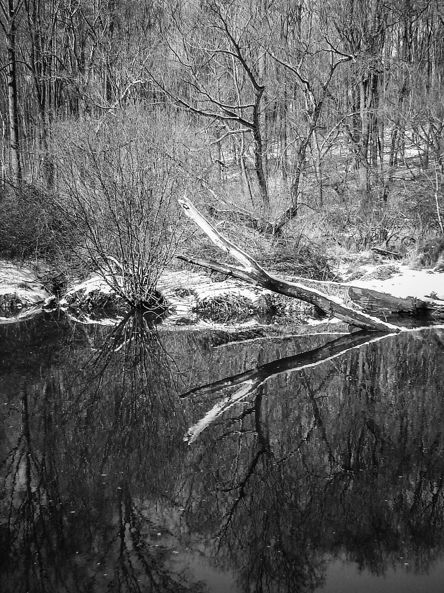 宾州雷德利克里克公园(Ridley creek park),秋去冬来_图1-35