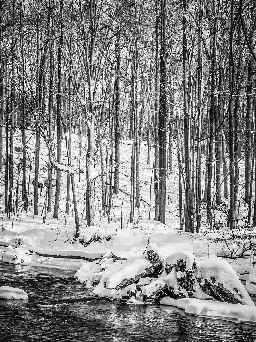 宾州雷德利克里克公园(Ridley creek park),秋去冬来_图1-34