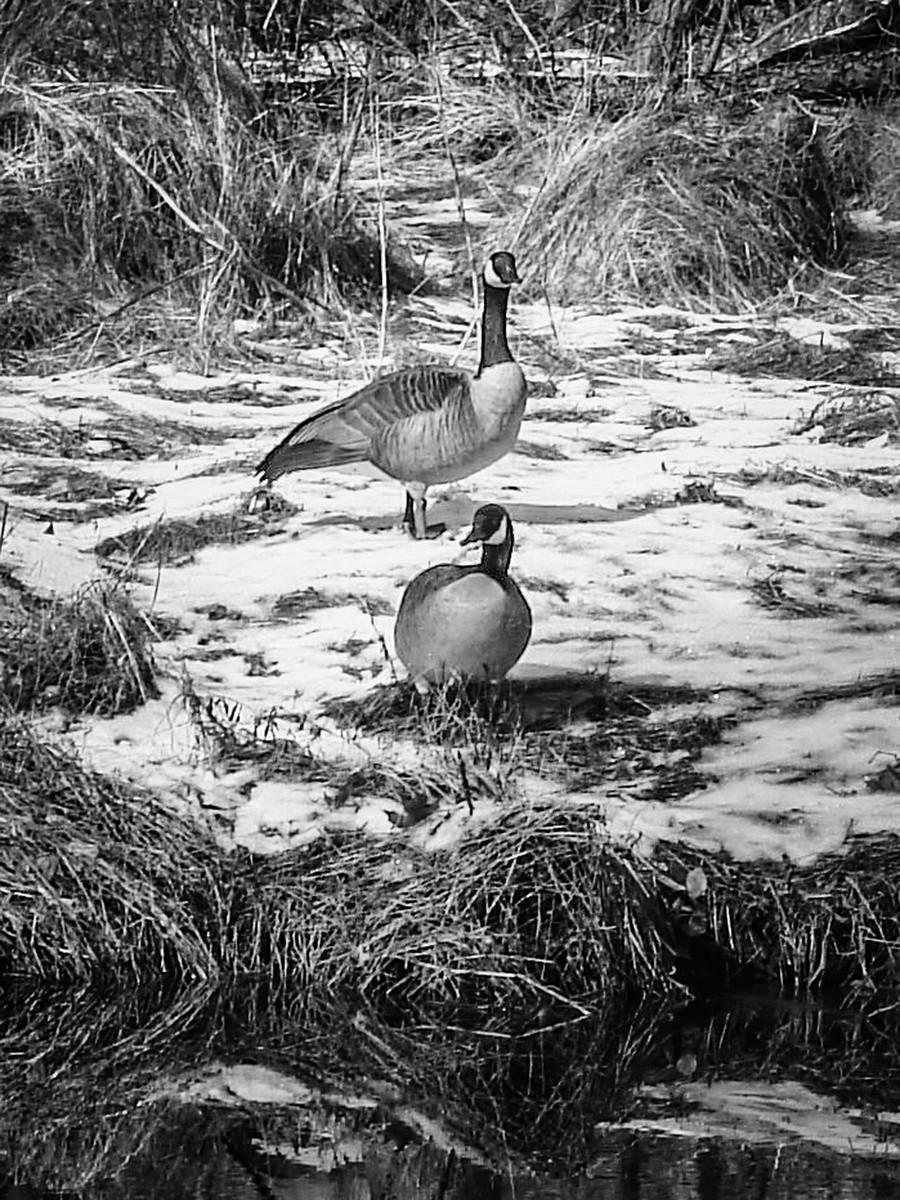 宾州雷德利克里克公园(Ridley creek park),秋去冬来_图1-31