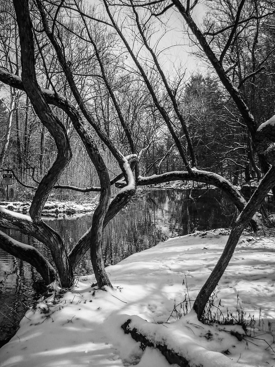 宾州雷德利克里克公园(Ridley creek park),秋去冬来_图1-36