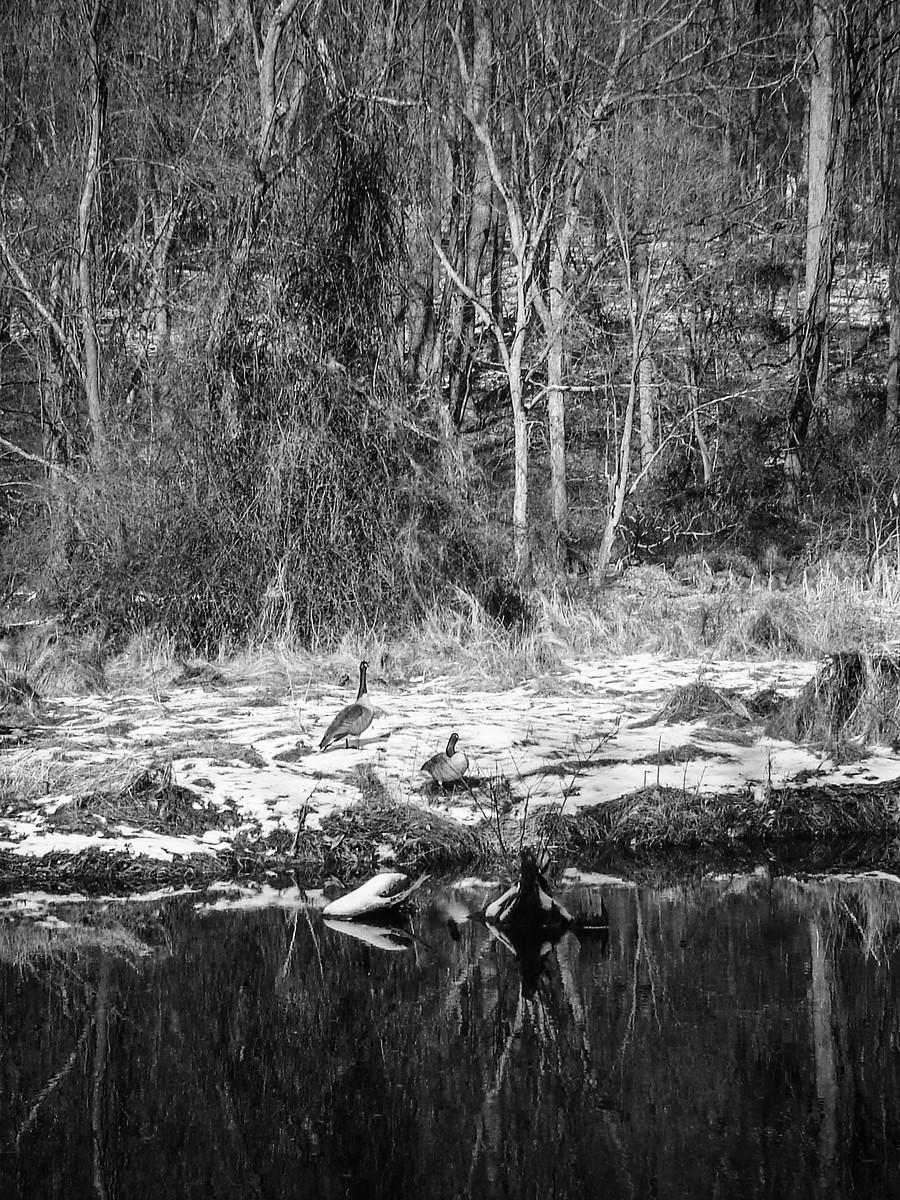 宾州雷德利克里克公园(Ridley creek park),秋去冬来_图1-39
