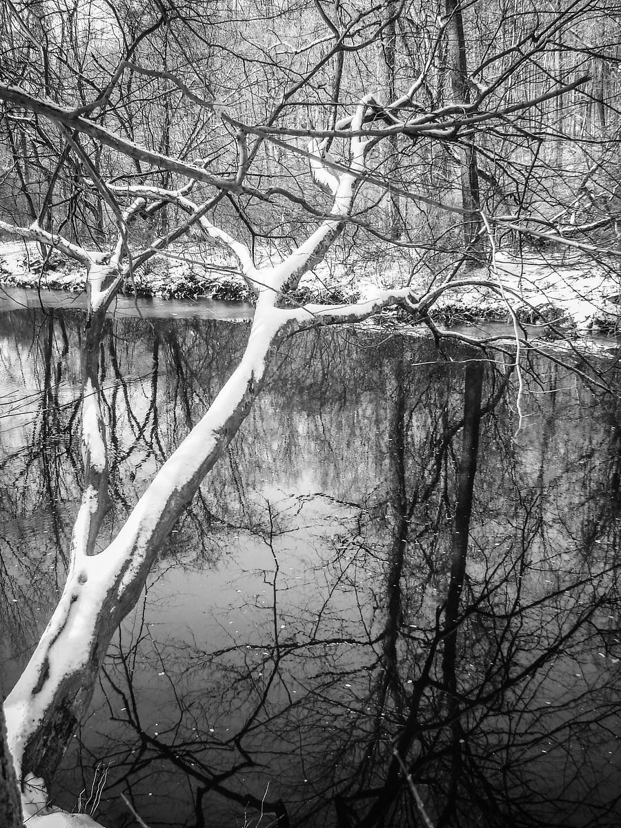 宾州雷德利克里克公园(Ridley creek park),秋去冬来_图1-40