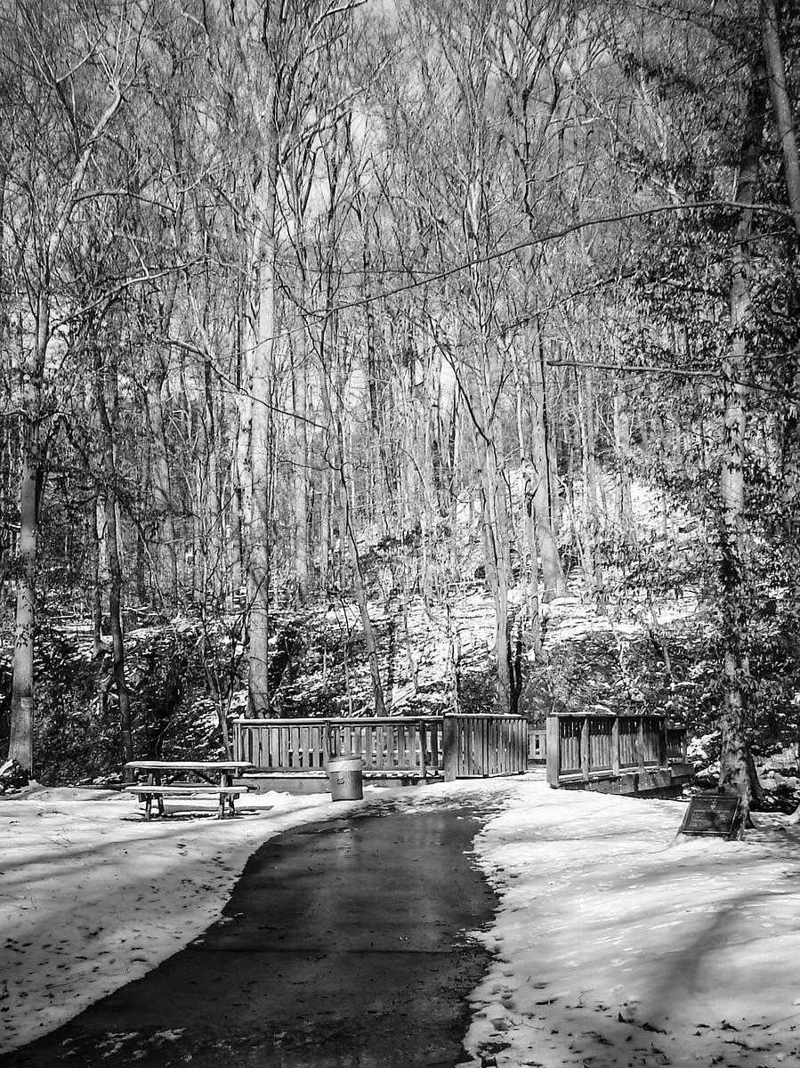 宾州雷德利克里克公园(Ridley creek park),秋去冬来_图1-37