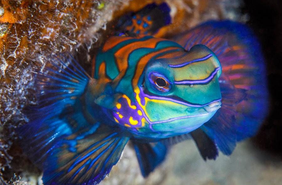 帕劳岛国之花斑连鳍_图1-1