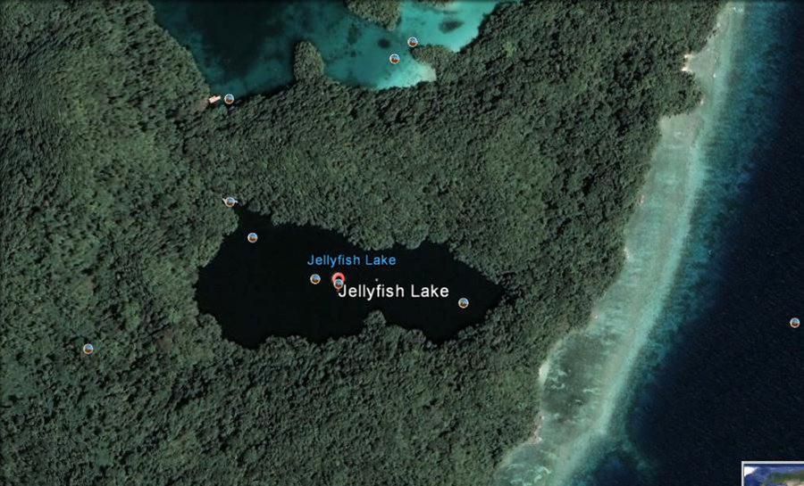 帕劳岛国之花斑连鳍_图1-2