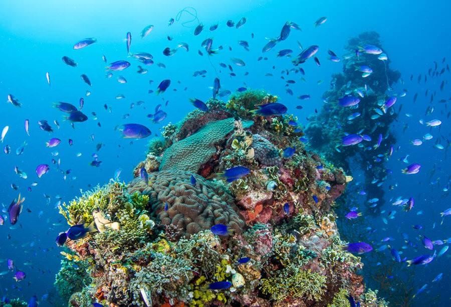 帕劳岛国之花斑连鳍_图1-9