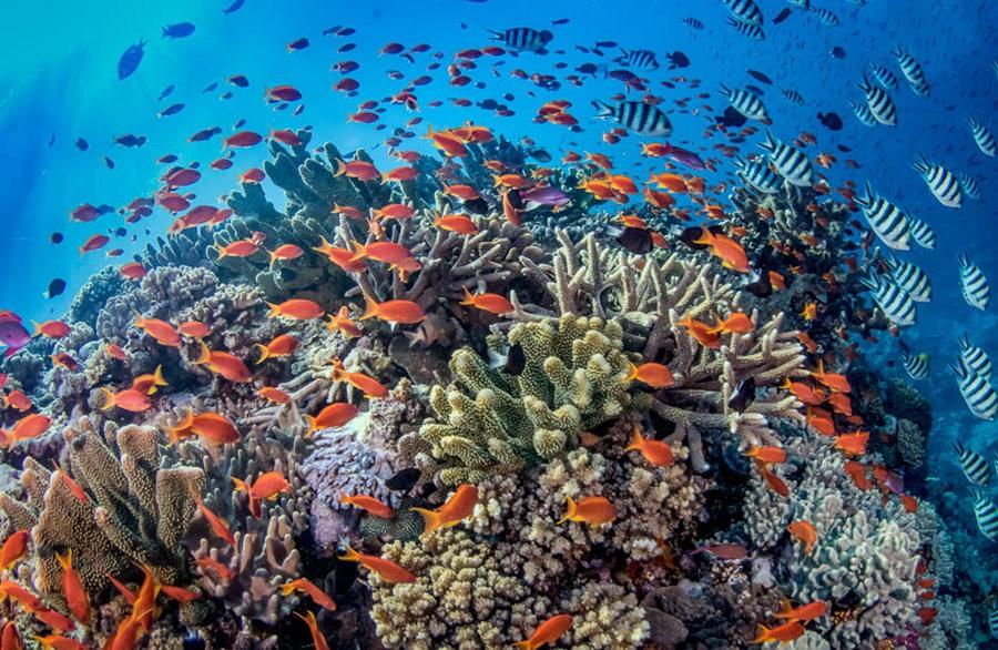 帕劳岛国之花斑连鳍_图1-10