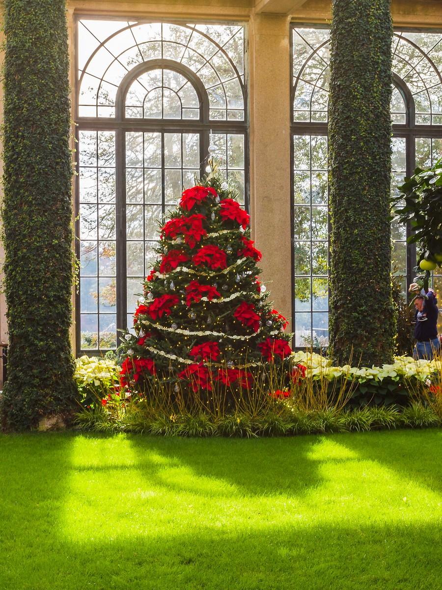 宾州长木公园,圣诞红_图1-37