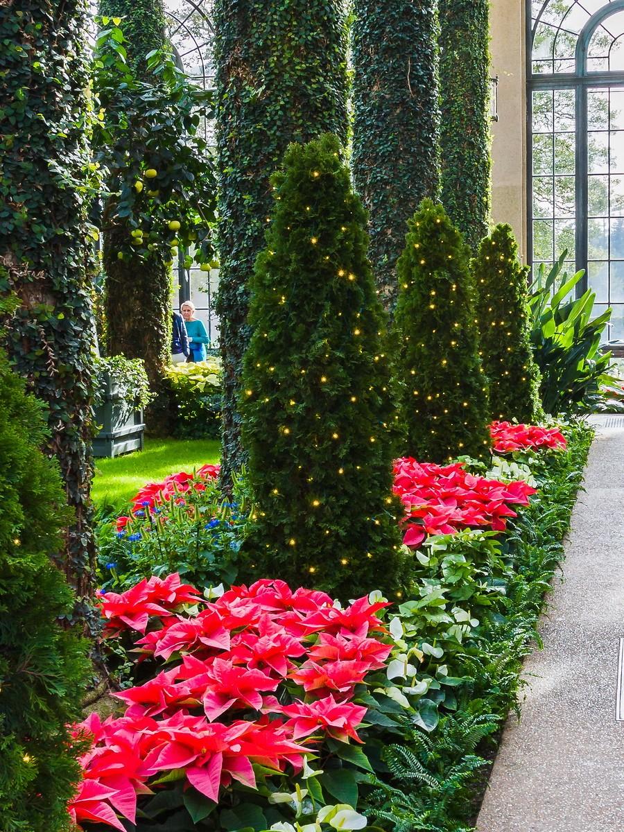 宾州长木公园,圣诞红_图1-39