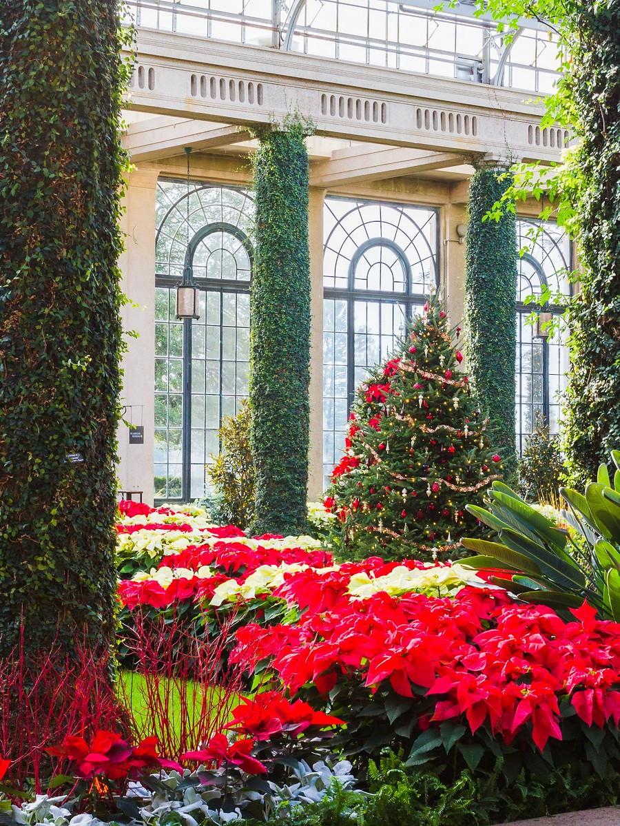 宾州长木公园,圣诞红_图1-25