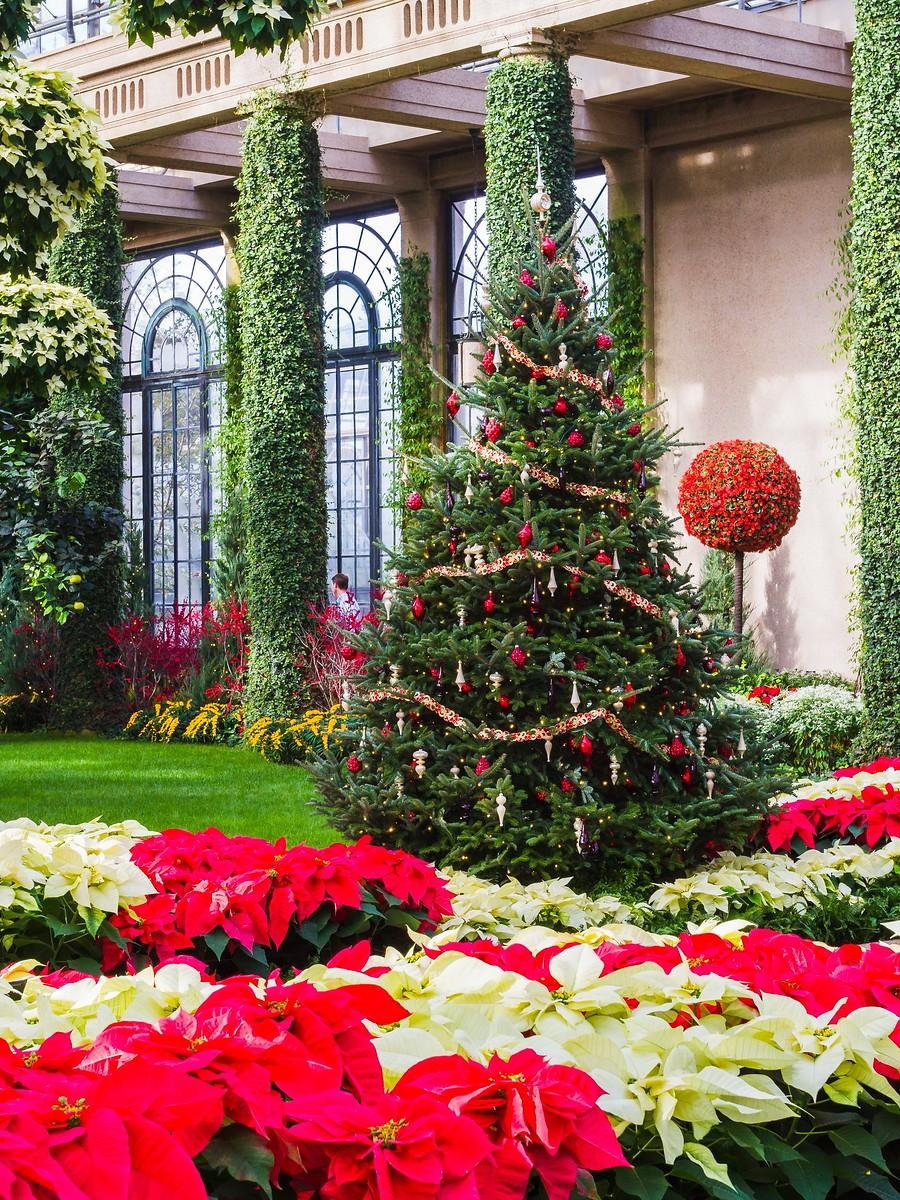 宾州长木公园,圣诞红_图1-26