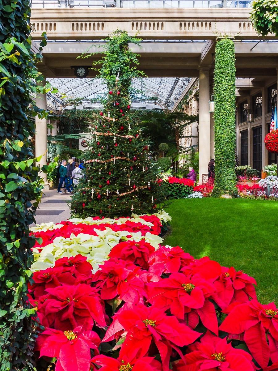 宾州长木公园,圣诞红_图1-18