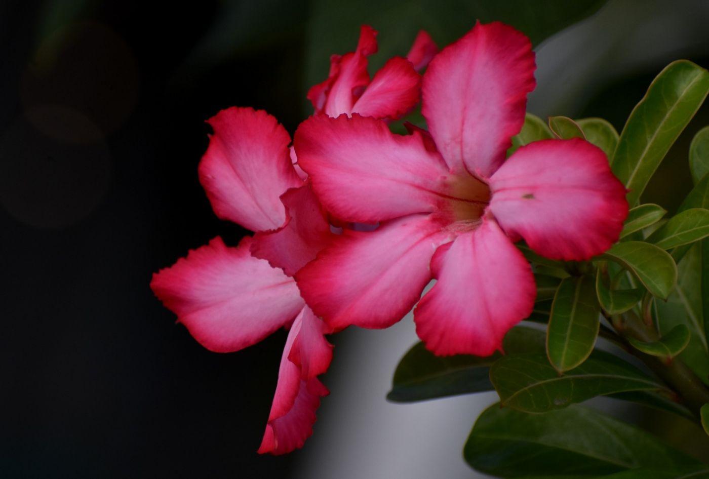 沙漠玫瑰_图1-16