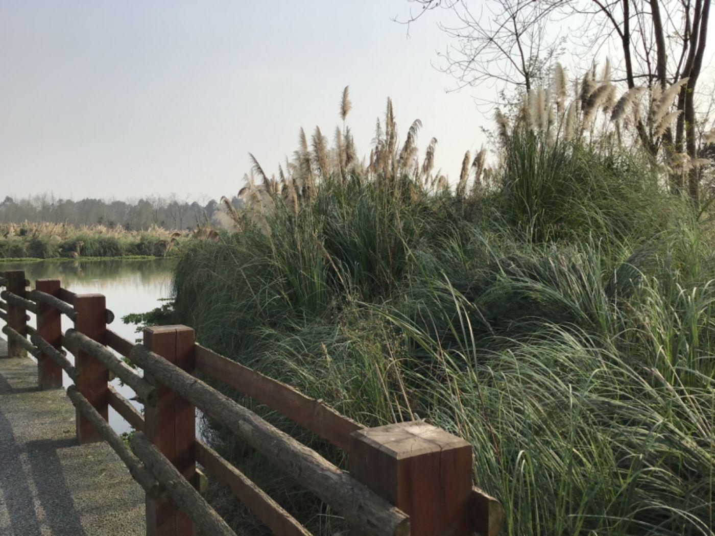 新津白鹤滩湿地公园_图1-11