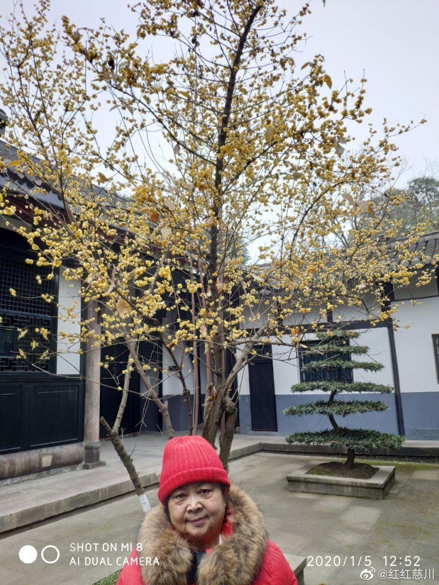 新都宝光寺与桂湖公园_图1-10