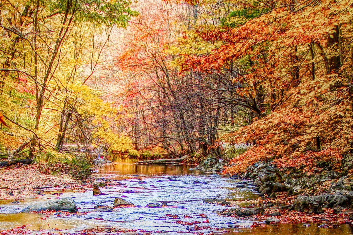 宾州雷德利克里克公园(Ridley creek park),糊涂的爱_图1-9