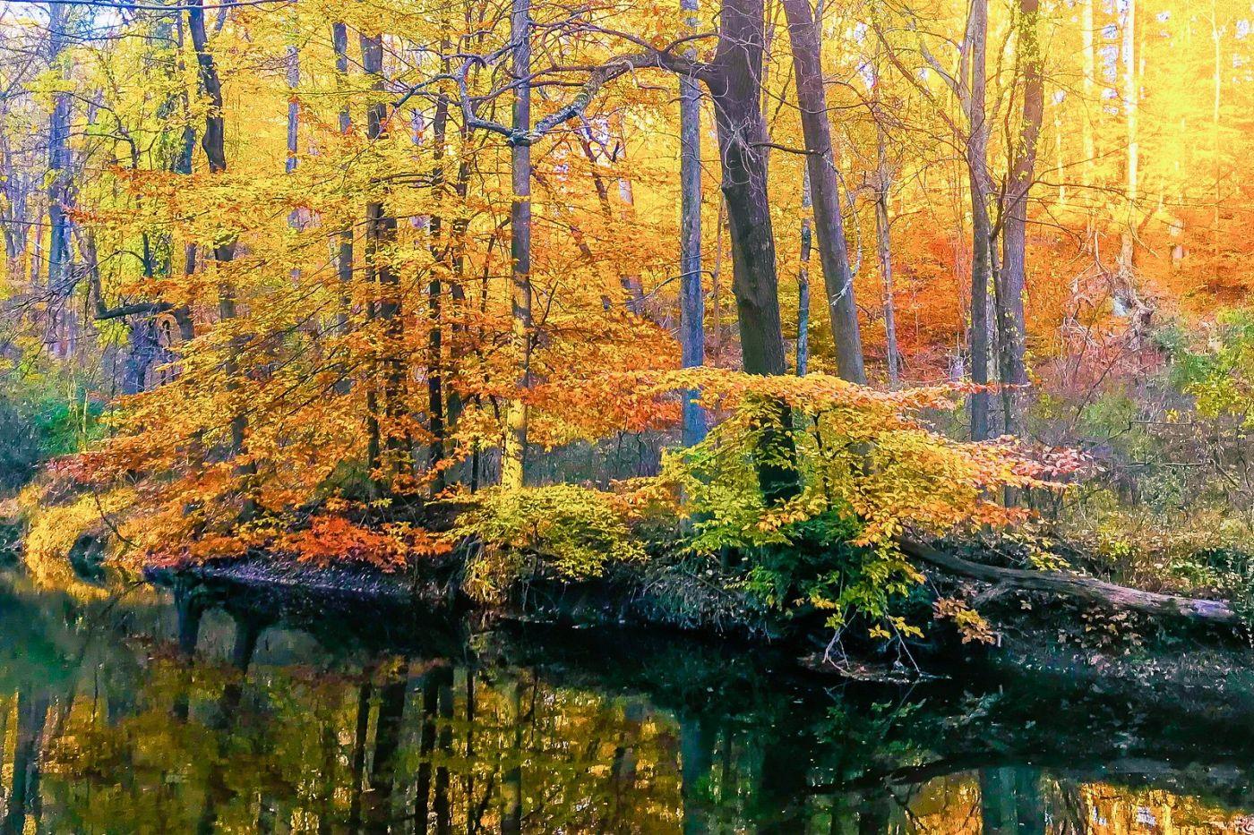 宾州雷德利克里克公园(Ridley creek park),糊涂的爱_图1-8