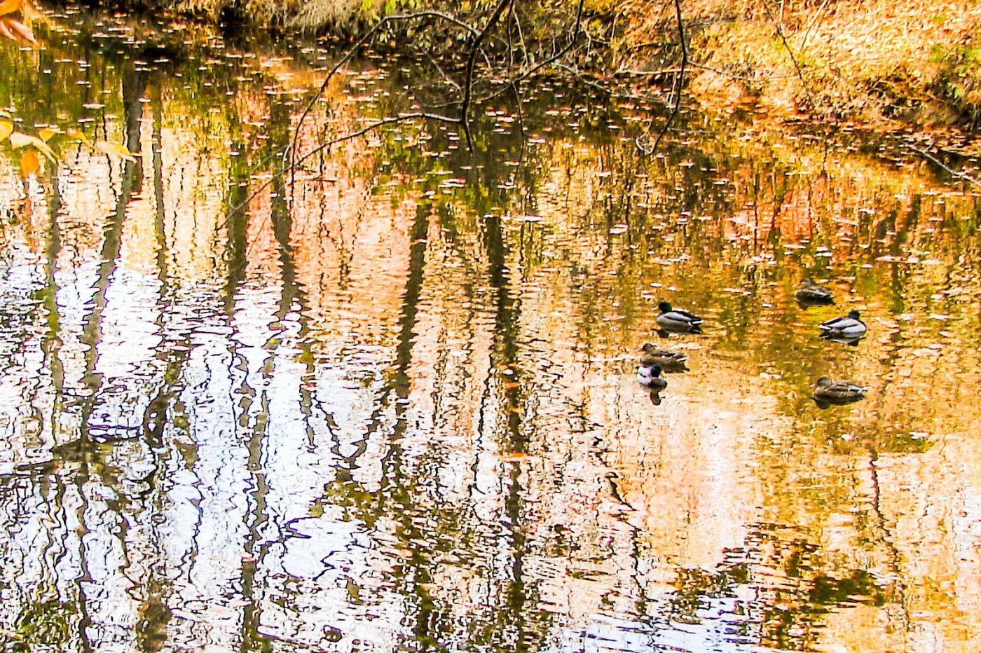 宾州雷德利克里克公园(Ridley creek park),糊涂的爱_图1-4